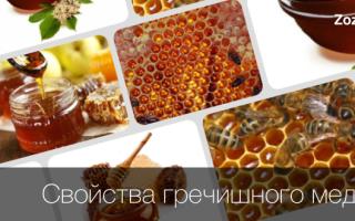 Гречневый мед полезные свойства
