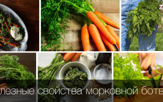 Чем полезна ботва моркови