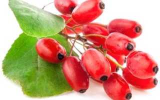 Плоды барбариса полезные свойства и противопоказания