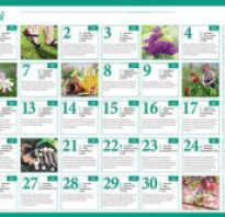 Лунный календарь садовода и огородника на май 2020 года