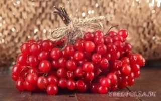 Калина с сахаром полезные свойства