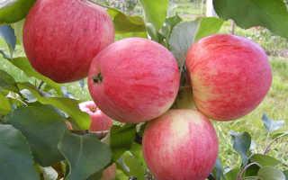 Яблоня штрейфлинг описание