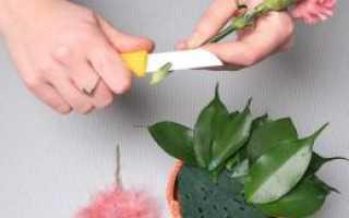 Зеленая губка для цветов как называется