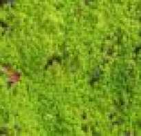Где растет мох сфагнум