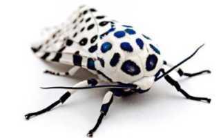 Плюсы и минусы насекомых