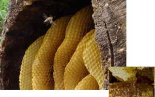 Мед диких пчел полезные свойства