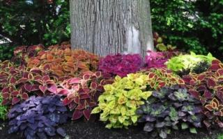 Украшаем плодовый сад приствольными клумбами и цветниками