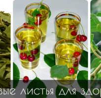 Листья вишни полезные свойства и противопоказания