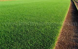 Рулонные газоны и их виды