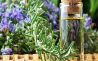 Розмарин трава полезные свойства