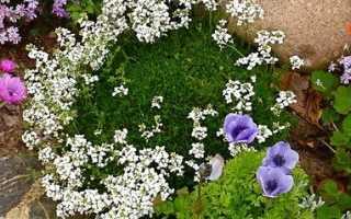 Цветы для альпийской горки фото и названия