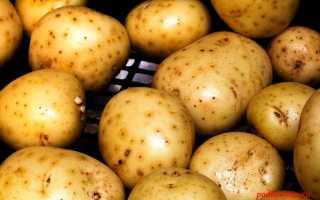Болезни картофеля в картинках фото