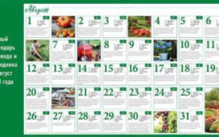 Лунный календарь садовода и огородника на август 2020 года