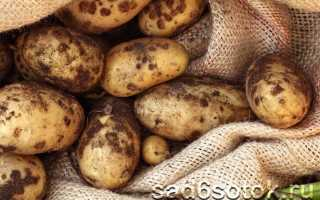 Обыкновенная парша картофеля