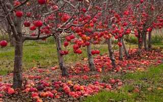 Подготовка деревьев к зиме осенью