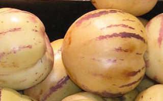 Пепино выращивание в домашних условиях из семян