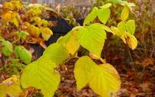 Малина уход осенью