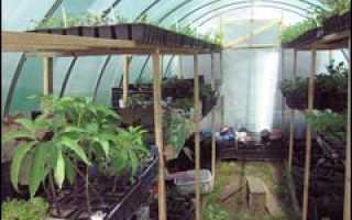 Сроки посевов многолетников зимой