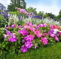 Садовые многолетние цветы название