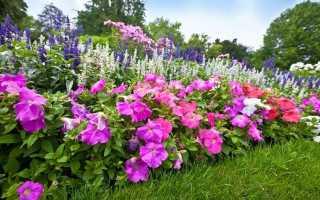 Цветы в огород многолетние