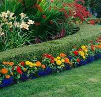 Многолетние цветы на даче фото и название