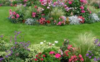 Размещение растений в цветнике