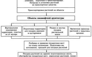 Правила выбора и схема посадки насаждений