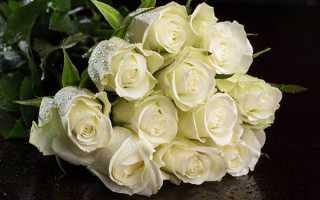Каким цветом бывают розы