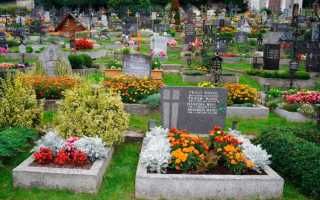 Цветы многолетние низкорослые на могилу
