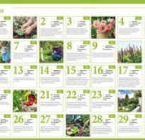 Лунный календарь садовода и огородника на июнь 2020 года