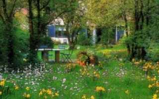 Цветущая лужайка вместо строгого газона
