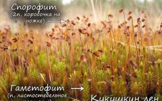 Строение моховидных растений
