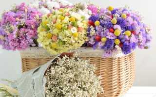 Сухоцветы в саду и в доме