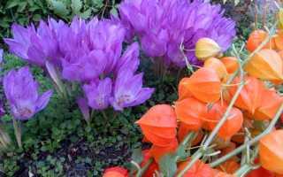 Осенние цветники фото
