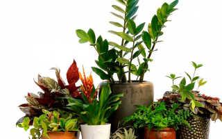 Приведите примеры светолюбивых теневыносливых и тенелюбивых растений