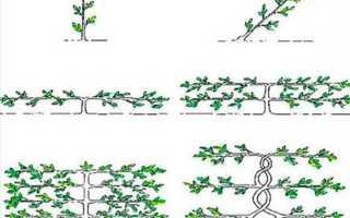 Функции и высота живых изгородей