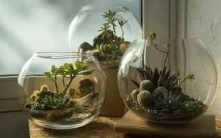 Изготовление флорариумов своими руками
