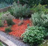 Пряные растения в саду и на столе