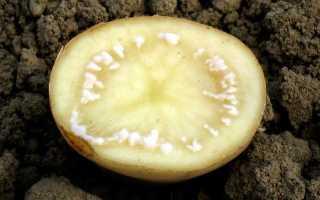 Болезни картофеля описание с фотографиями