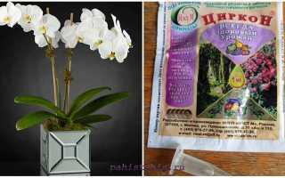 Циркон для орхидей как применять удобрение полив дозировка