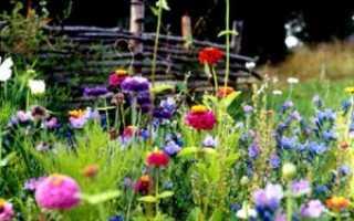 Цветущий мавританский газон своими руками какие цветы и травы нужны