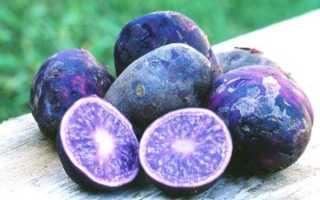 Синий картофель полезные свойства