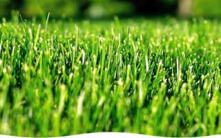 Газонная трава ландшафтный дизайн своими руками