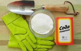 Правила применения пищевой соды в саду и огороде