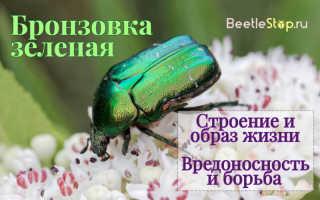 Зеленый жук название